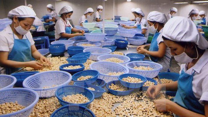 Quý 1, Việt Nam xuất khẩu điều đạt 739 triệu USD